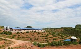 公司探索构建基地猪沼果生态循环体系