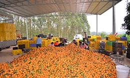 发展壮大村级集体经济 产业富民实现乡村振兴